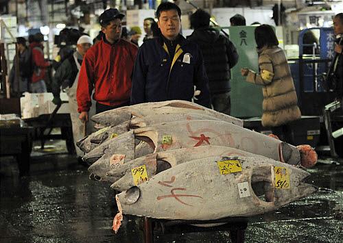 .[영문] Japan to tourists: Please dont lick the tuna.