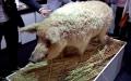 중국 돼지고기 가격 탄력… 미국 육류 수출량 기대 고조