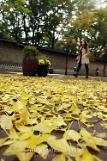 .Fallen leaves after rainfall .