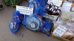 .[AJU VIDEO] Hornets nest sold for medicinal purposes at the Kyung Dong market.