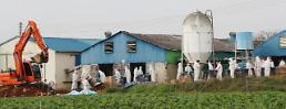 .S. Korea culls 400,000 birds, reports bird flu case near Seoul .