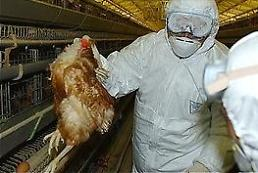 .高病原性禽流感肆虐全韩国 家禽出口亮红灯.
