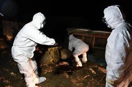 .韩投入大量人力扑杀家禽应对禽流感 人体感染风险上升引忧虑.
