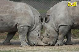 .Poachers killed a white rhino and sawed off his horn in Paris zoo.