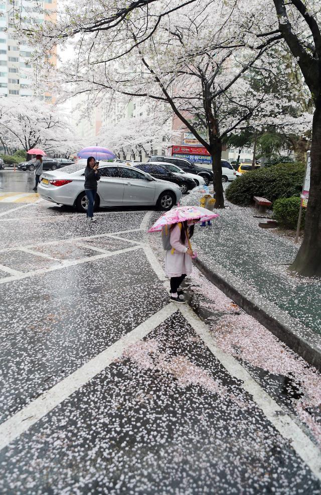 樱花春雨两簌簌