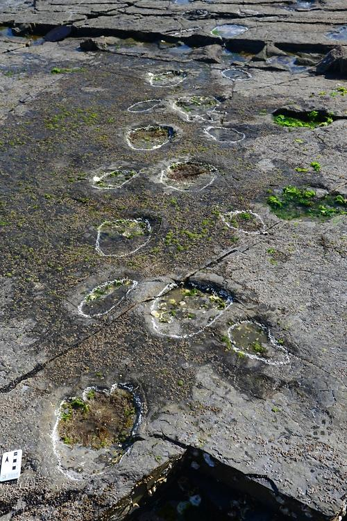Traces of limping Cretaceous dinosaur found in footprint fossil heaven