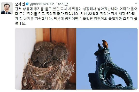 Moons bird-catching pet cat gains freedom in presidential residence