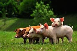 .Scientists produce transgenic pig model for Alzheimers disease.