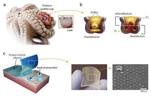 S. Korean scientists invent wet-tolerant adhesive patch inspired by Octopi