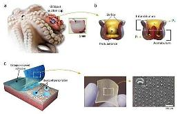 .S. Korean scientists invent wet-tolerant adhesive patch inspired by Octopi.
