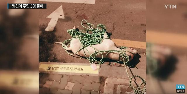 Feral dogs go on rampage in midnight Seoul