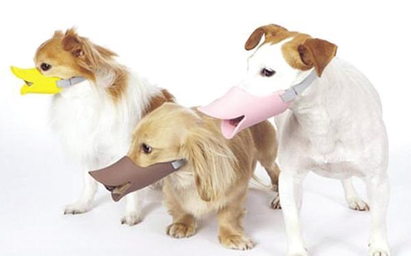 宠物狗咬伤人!韩国法院都是怎么判的?