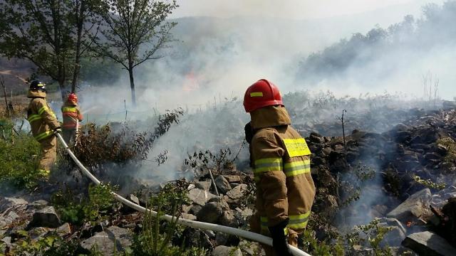 가을철 산불 65%…입산자 실화와 소각산불에 의해 발생