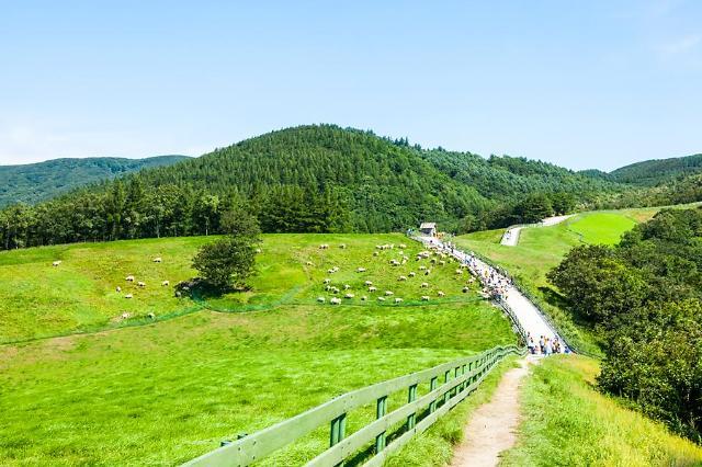 韩旅游发展局放大招 选定80个旅游商品吸引自由行游客