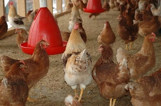 平昌冬奥会开幕在即 江原道附近检出H5N6型禽流感病毒