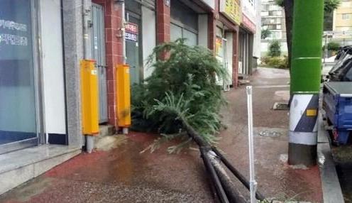"""台风""""苏力""""走啦! 韩国大部分地区解除警报"""