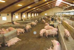 .韩国出现第二例非洲猪瘟疫情 .