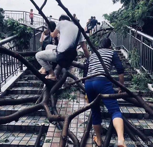 [중국포토] '괴물 태풍 망쿳' 계단 아닌 '나무'에 올라 출근하는 선전 시민들