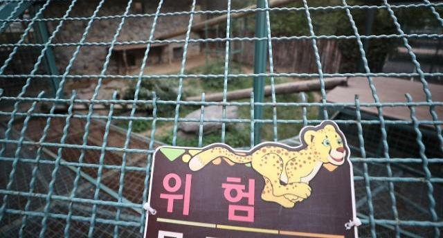 대전동물원 퓨마 탈출 결국 사살