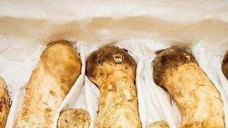 北 김정은이 선물한 송이버섯 2톤, 가격이 무려 약 15억 원?