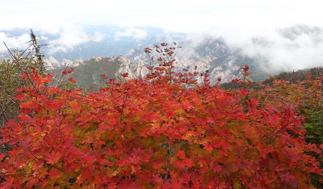 雪岳山枫叶初红