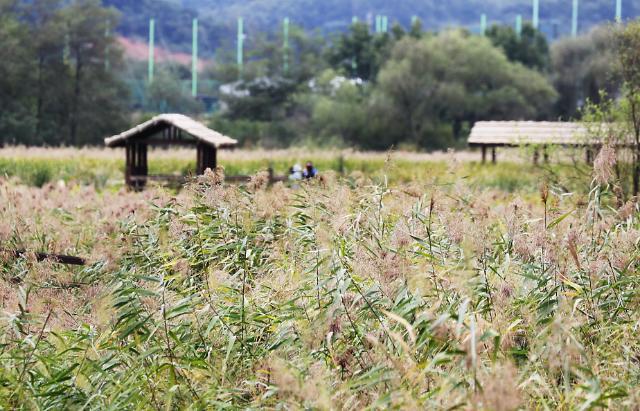 安山芦苇湿地公园秋意正浓