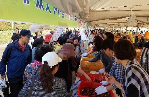 Lễ hội táo đỏ Boeun
