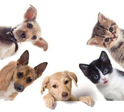 萌宠全盛时代来临 韩国宠物金融商品瞩目