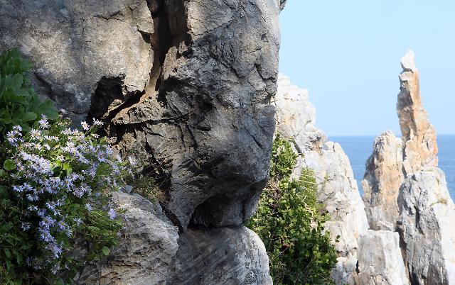 海菊开满灯台岩 东海岸秋景美如画