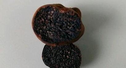 임실서 송로버섯 추정 버섯류 발견, 가격이 100g당 수백만원?