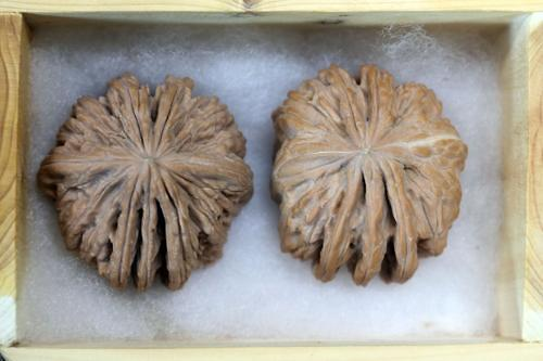 [PHOTO NEWS] Rare breed of kernelless walnuts with seven deep wrinkled shells