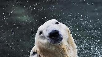 국내 유일 북극곰 통키 하늘나라로