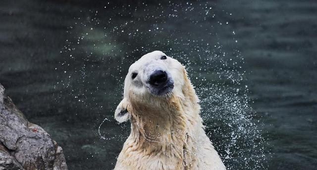 북극곰 '통키', 하늘나라로