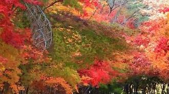 [포토] 울긋불긋 가을 세상