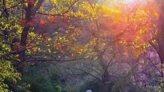 [중국포토] 쾌청한 가을날 도심 '북적'…칭다오 단풍놀이 명소 1위는?