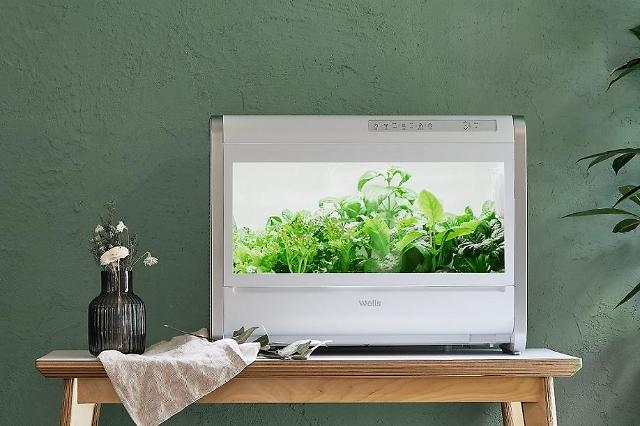 교원웰스 웰스팜, 안방에서 채소 키운다…항암쌈채 출시로 라인업 확대
