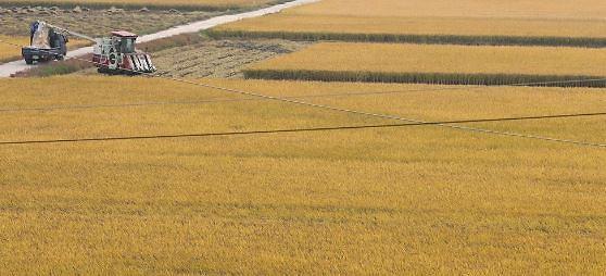 올해 쌀 생산량 386만8000톤 38년 만에 최저