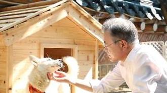 Quốc khuyển do Lãnh tụ Triều tiên tặng Tổng thống Hàn Quốc đã sinh được 6 con