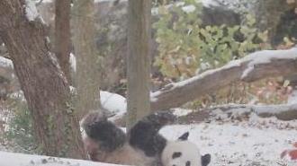[포토] 팬더의 재롱잔치