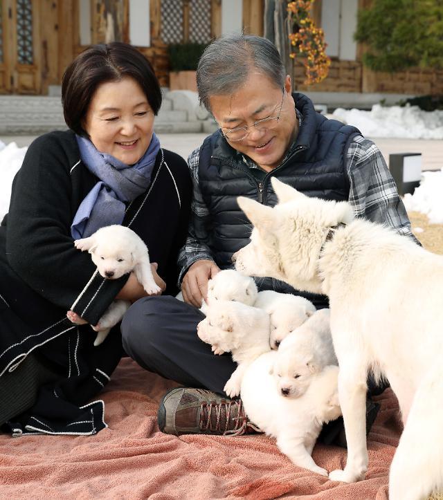 一朝君主一朝臣 韩国总统们养过的宠物都去了哪里?