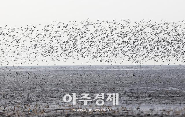 [화성시] 멸종위기 철새들의 휴식처인 화성습지 보존가치 인정받아