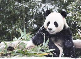 .大熊猫玩雪超嗨皮.