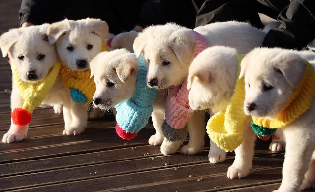 青瓦台公开丰山犬幼崽照片