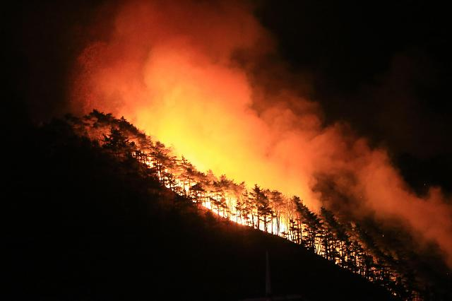 韩国东南部发生山林大火 20万平米森林被烧