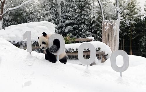 熊猫CP在韩人气旺 累计观赏人数达700万