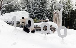 .熊猫CP在韩人气旺 累计观赏人数达700万.