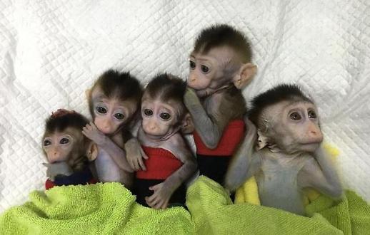 中, 유전자 편집 원숭이 5마리 공개…'생명공학 무법지대'인가