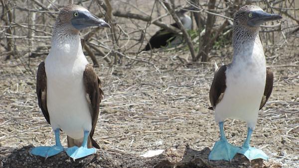 잼라이브, 오늘(24일) 힌트는 갈라파고스 섬의 바보…무슨 동물?