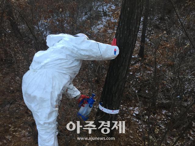 충남도, 소나무 재선충병 완전방제 '총력'