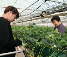 Tập đoàn thực phẩm Hàn Quốc thâm nhập sâu hơn vào thị trường Mỹ